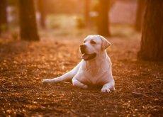 aprender com seu cão