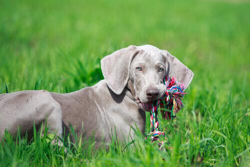 brinquedos-para-cachorros