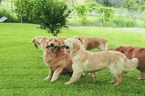 cães cheiram