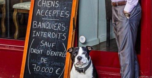 Restaurante em Paris permite cães, mas não banqueiros
