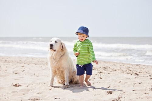 ca%cc%83o-e-crianc%cc%a7a-na-praia