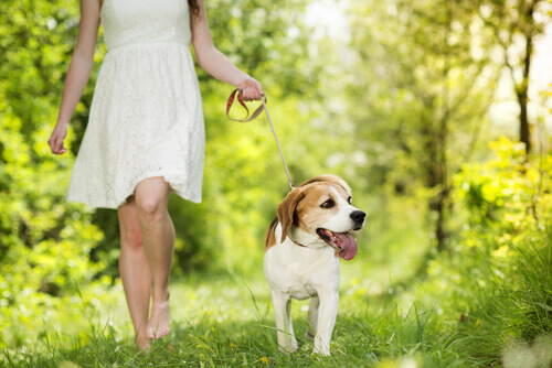 Seus batimentos cardíacos e os do seu cão têm o mesmo ritmo