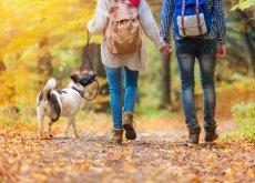cachorro-de-passeio