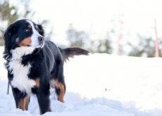 cachorro-na-neve