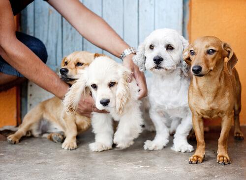 cachorros_a_venda