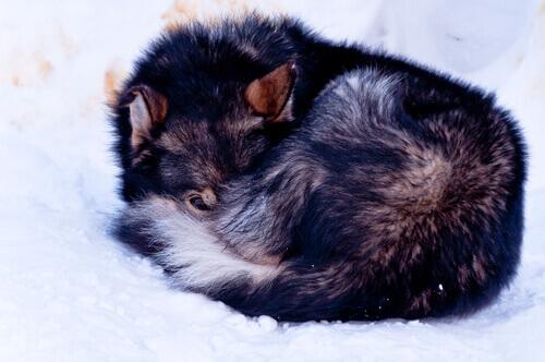 cadela-encontrada-na-neve-1