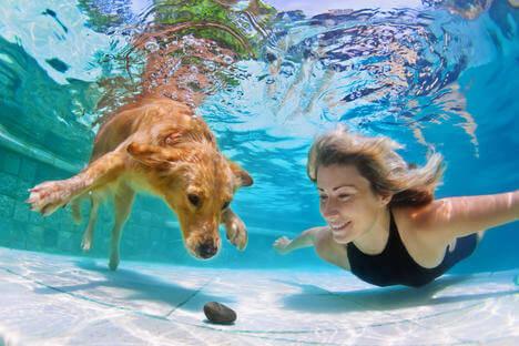 Invenção russa permite que cães respirem debaixo d'água