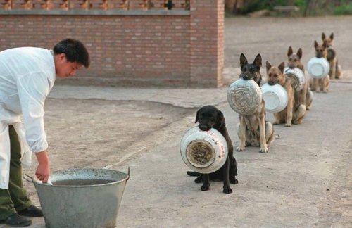 16 cachorros esperam sua vez para comer