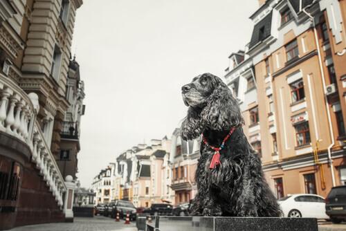 Cães modelos: um novo trabalho para seu animal