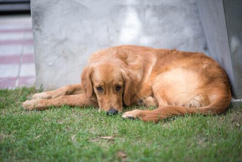 Como saber se o seu cão precisa de um psicólogo?
