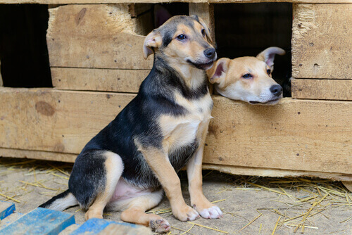 Iniciativa de construção de casas para cachorros de rua