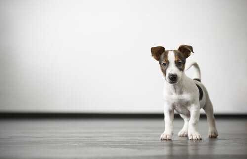 Como posso acabar com os gases do meu cachorro?