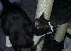gata desaparecida