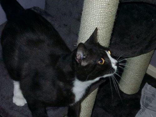Uma gata desaparecida em Londres aparece em Paris 8 anos depois