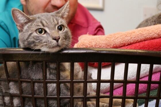gato-que-sobreviveu-a-lavadora-3