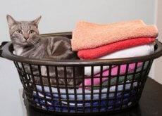 gato-que-sobreviveu-a-lavadora-e1471209743145