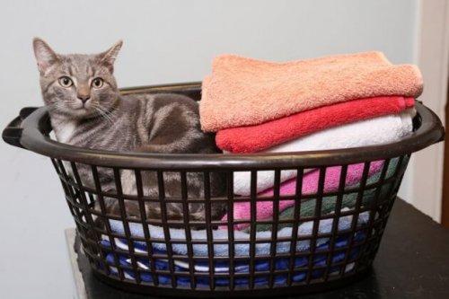 Um gato que sobreviveu à temperatura de 60 graus na máquina de lavar roupa