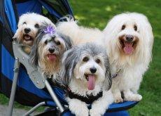 humanizar ao cão