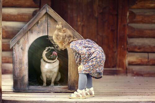 maltratar um cão inconscientemente