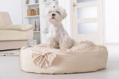 Parasitas que vivem na cama de seu cão