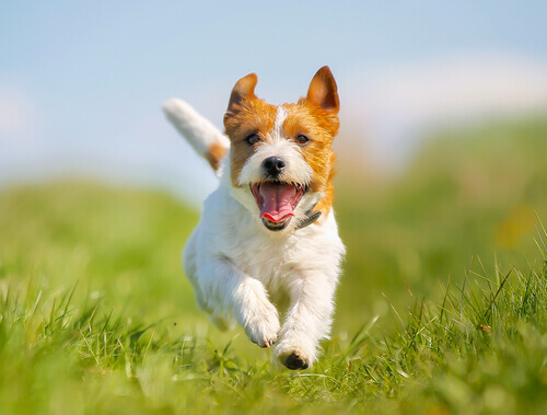 5 soluções para a prisão de ventre nos cachorros