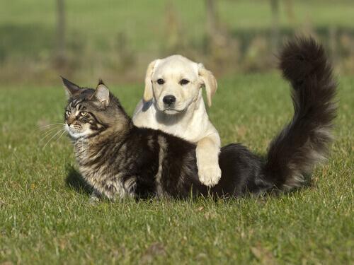 Como curar as queimaduras do seu cão ou gato em 3 passos