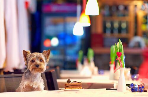 Restaurantes onde cães podem comer sozinhos