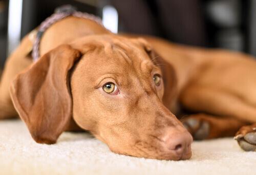 5 conselhos para ajudar o seu cão a superar os medos