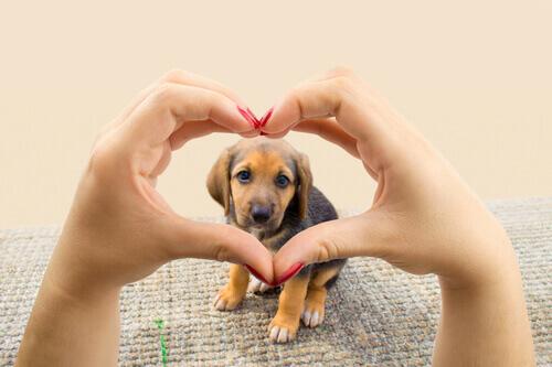 Cãozinho dentro de um coração