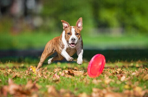 Como escolher um brinquedo para o seu cachorro?