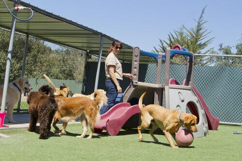 abrigos-para-ajudar-os-animais