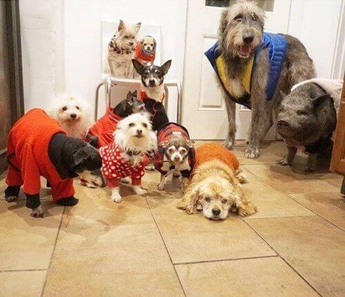 Adoção: homem adota 10 cães idosos e um porco para salvá-los