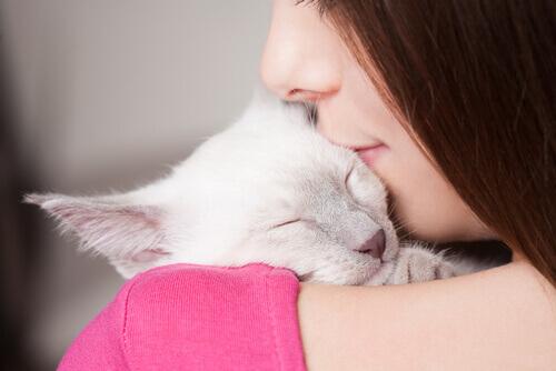Fresco Imagens Com Frases De Boa Noite Com Gatos