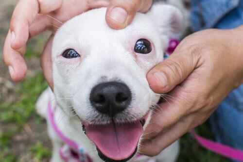 Como ajudar um cão com fobia a barulho