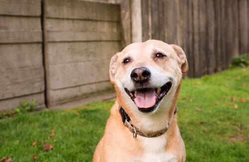 sorriso dos cães