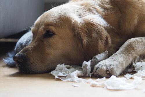 5 conselhos para que o seu cachorro não destrua as coisas