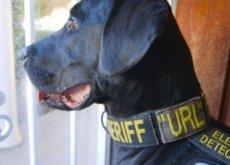 Url, o Cão policial