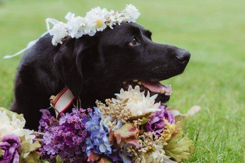 Um cão com tumor cerebral morre depois de assistir ao casamento de sua dona