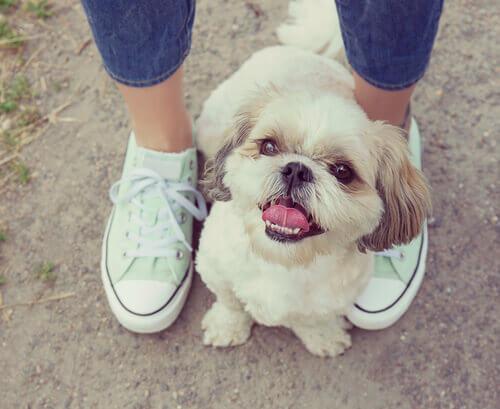Por que os cachorros gostam de ficar entre os nossos pés?