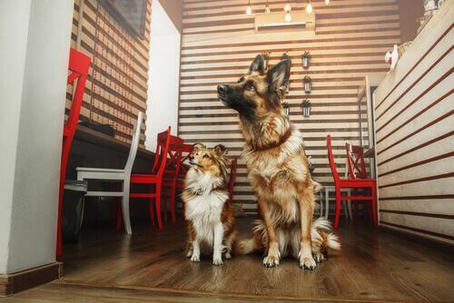 Um lugar onde tomar um café, conversar com os amigos e adotar um cão