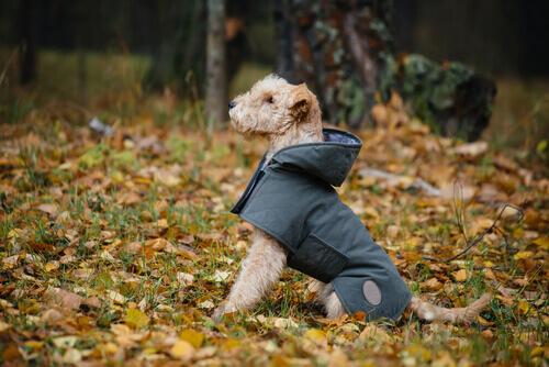 Saiba como fazer um casaco impermeável para seu cão