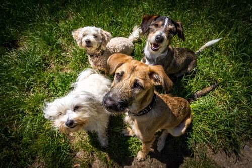 Coisas que todo cão deve fazer. Não o humanize!