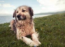 problemas de comportamento em cães
