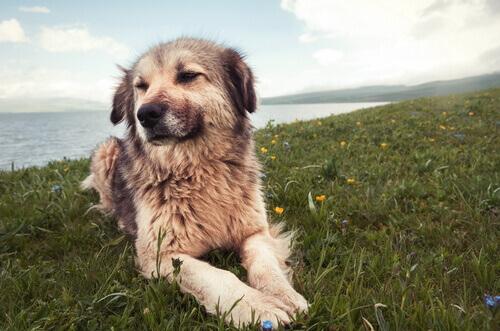 7 causas de problemas de comportamento em cães