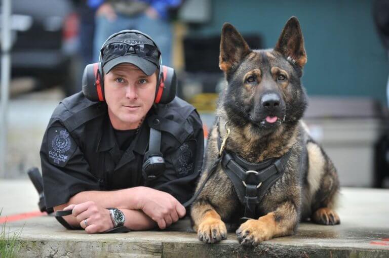 danko-o-cao-policial-aposentado-2