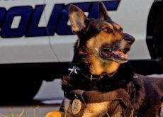 cão policial aposentado