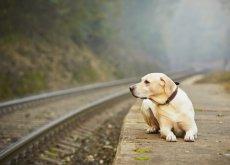 donos abandonam o próprio animal de estimação