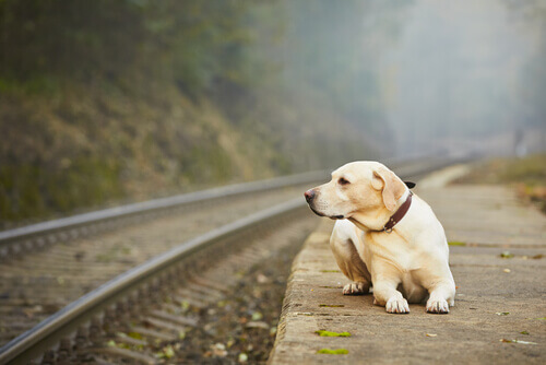 Por que alguns donos abandonam o próprio animal de estimação?