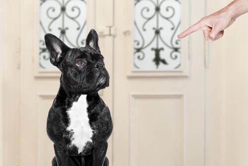 No que você erra na hora de educar o seu cão?