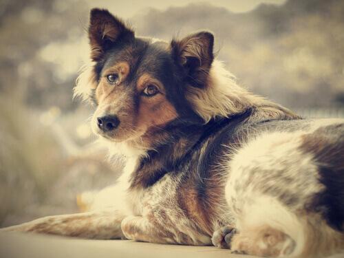 Livre-se da solidão: adote um cão!